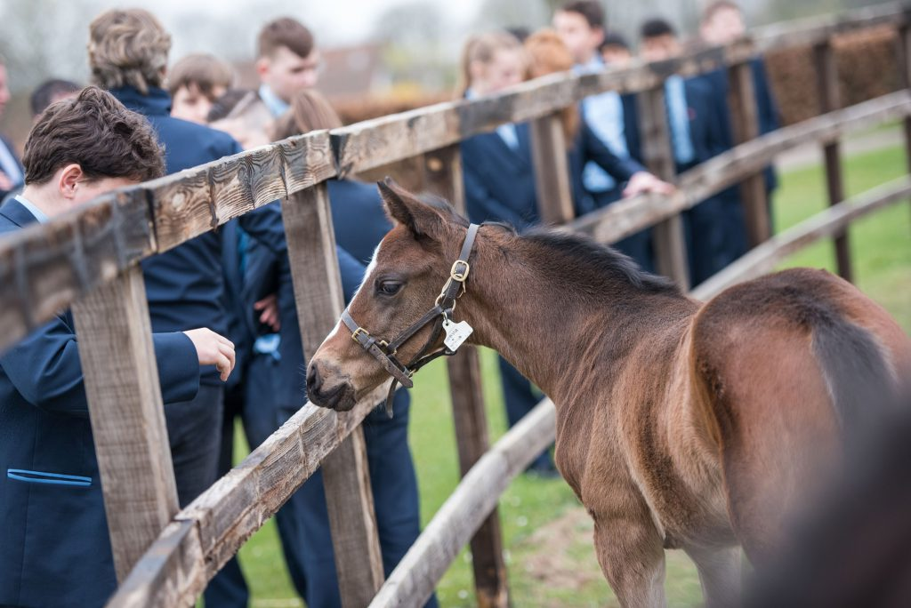 Newmarket Academy Godolphin Beacon Project Racing To School Travel and Tourism Rae Guest stable, Rowley Mile, National Stud and Warren Hill with Discover Newmarket. Picture Mark Westley