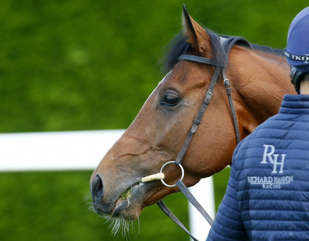 Richard Hannon Charity Open Morning - yard photo featuring Barney Roy